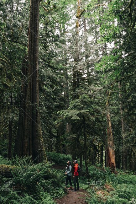 A young couple enjoys a hike in a forest in the Pacific Northwest.