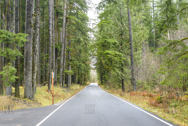 Paved Road Through An Evergreen Forest