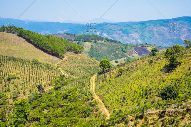 Coffee plantations in Central Highlands, Vietnam