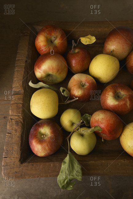 Fresh Picked Apples in Wood Crate