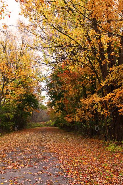 Fall Foliage Street Scene in Upstate NY