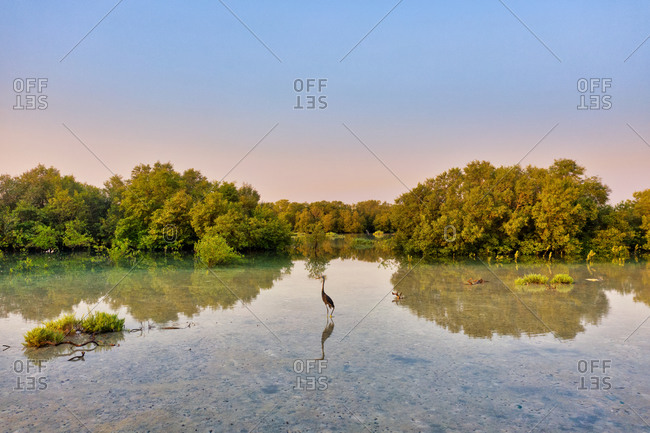 Aerial view of bird at flooded vegetation at Abu Al Sayayif during sunset, Abu Dhabi, UAE.