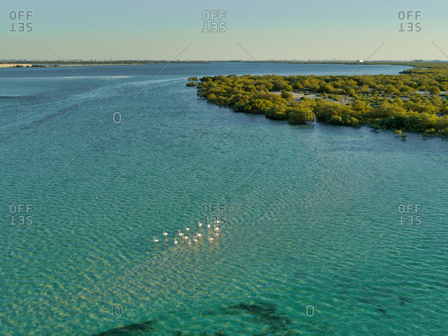 Aerial view of bird flock at Jubail Mangrove Park in Abu Dhabi, United Arab Emirates.