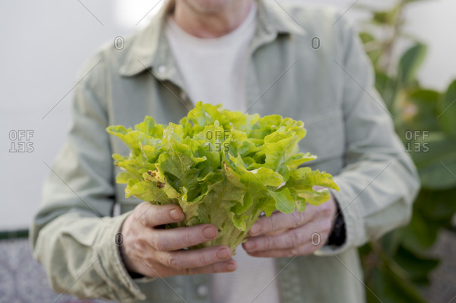 Close-up of senior man holding lettuce