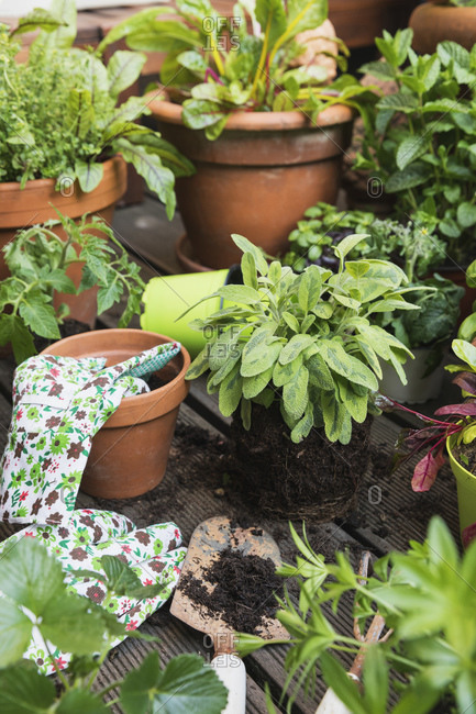 Planting of various culinary herbs and vegetables