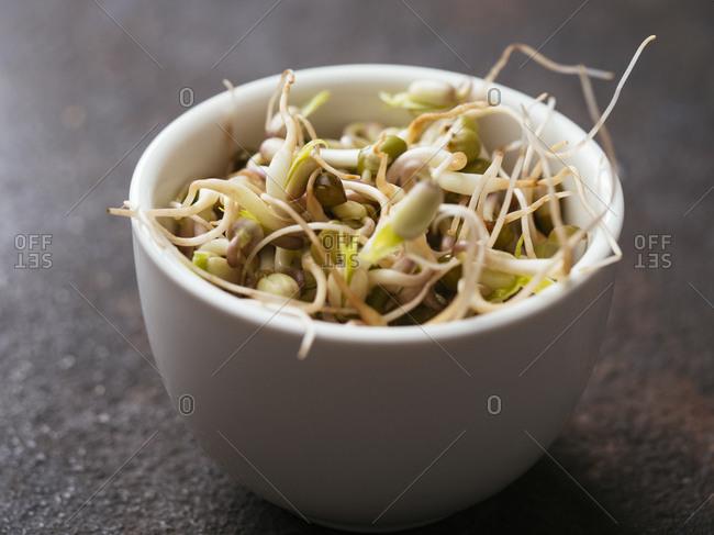 Bowl of fresh mung bean sprouts (Vigna radiata)