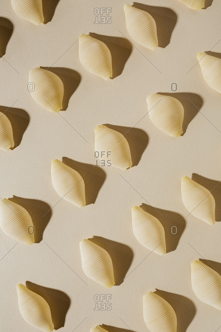 Conchiglie pasta spaced in rows with shadow