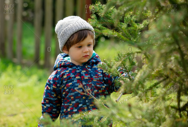 Cute toddler boy in hat explore a spruce needles in a garden