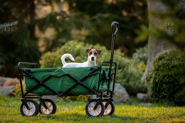 Stroller wagon with a dog inside in a garden in sunset time