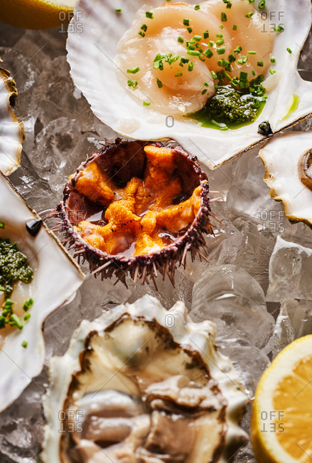 Scallops, oysters and sea urchins on ice