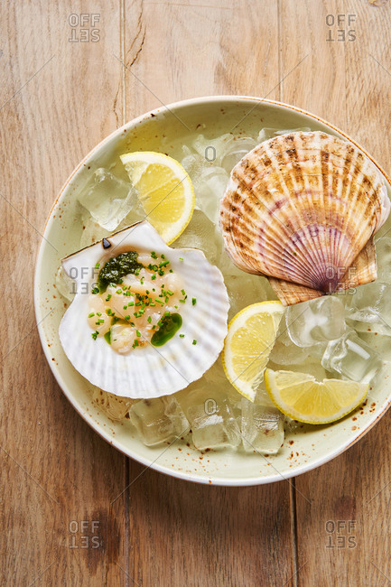 Scallops in shells on ice with lemon and green sauce