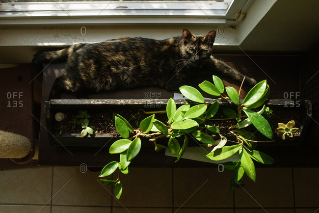 Cat laying in the sun next to a house plant