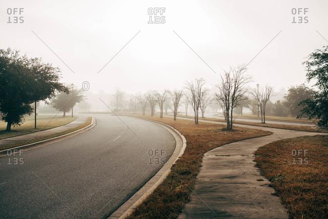 Fog over neighborhood with tree-lined street