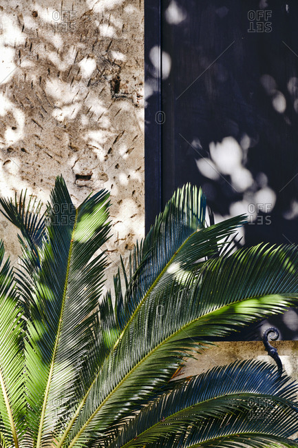 Palm leaves in front of a window with dappled light