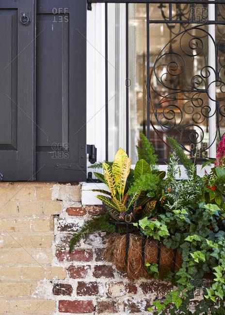 Tropical leafy plants in a window planter