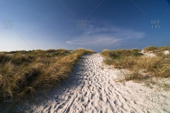 Dune on the beach in Prerow, Mecklenburg-West Pomerania, Germany