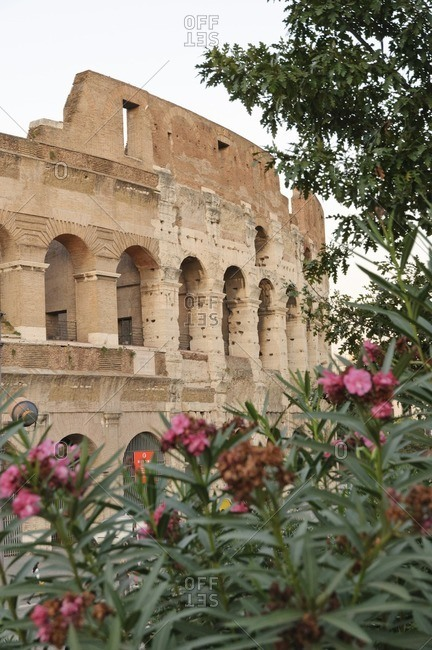 Colosseum framed by flowers, Rome, Italy