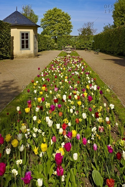 Tulip bed in orangery from Belvedere Palace near Weimar, Thuringia, Germany