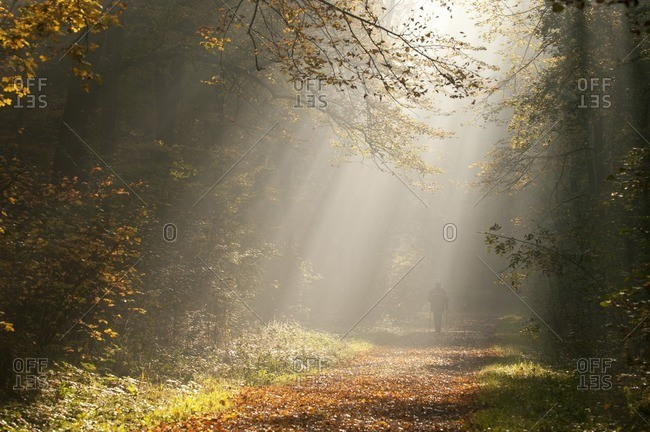 Man runs through autumn forest in the morning