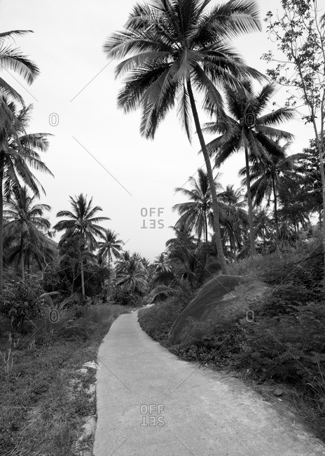 Small road through palm forest, Kho Tao, Thailand, Southeast Asia