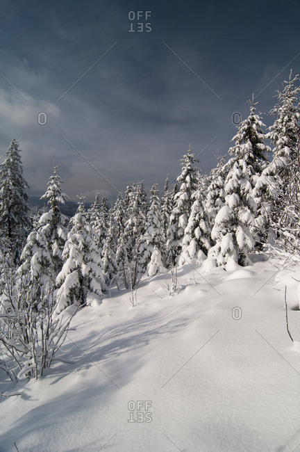 Forrest landscape in the snow