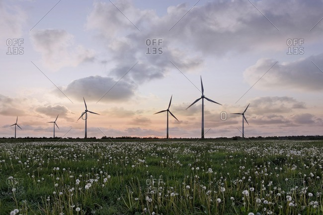 Wind farm and wild flowers at sunset