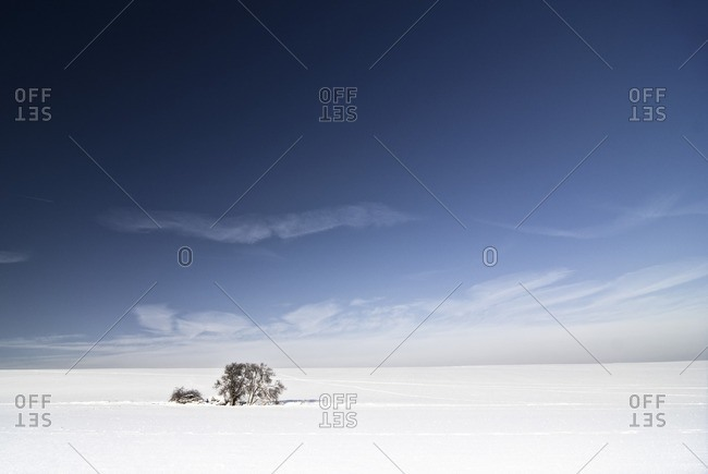 Single tree in a snowy landscape