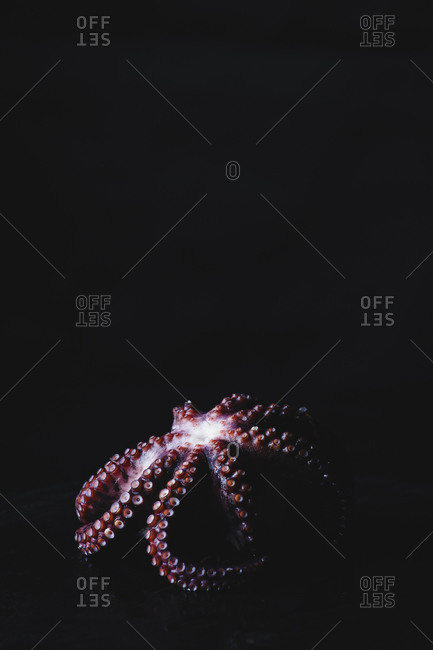 Cooked Octopus On A Dark Surface