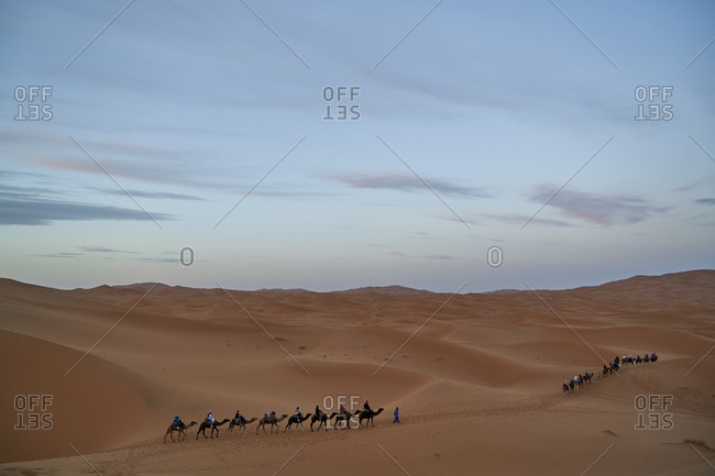 November 5, 2017: Erg Chebbi  Dunes, Merzouga, Saharan Morocco;  05 November 2017; Berber man leading camel caravan in Erg Chebbi Sand dunes in Sahara Desert. The dunes are one of Morocco's best Sahara Desert destinations. Erg Chebbi special feature is its beautiful unique orange colored sand. Erg Chebbi dunes are bean shaped and cover an area 30km long and around 5-10km wide. This is a region on nomad Berbers.