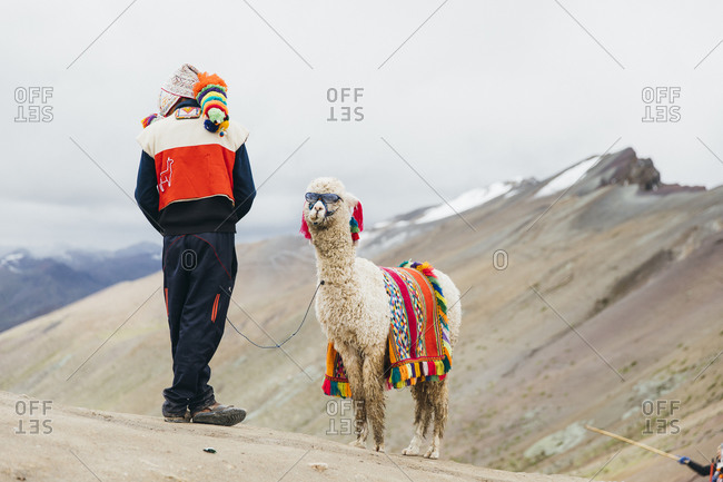 A local Peruvian man is standing near a llama with sunglasses in Peru