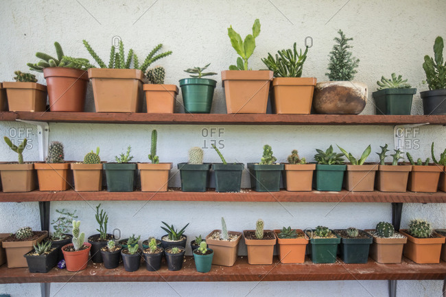 Assorted cactus and succulent plants on shelf garden.