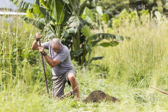 Elderly man digging hole outdoors.