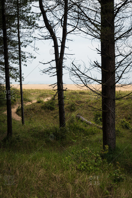 Forest Path Leading onto the Norfolk Coast
