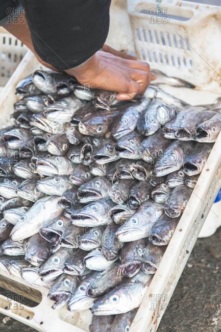 A fishmonger puts fresh fish in a basket