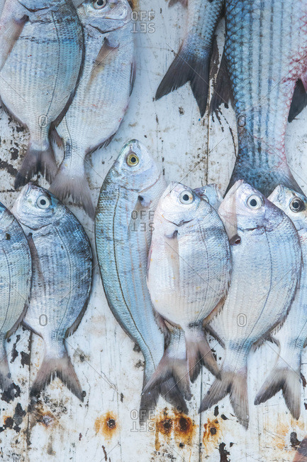 Fish being sold on the market in the harbor
