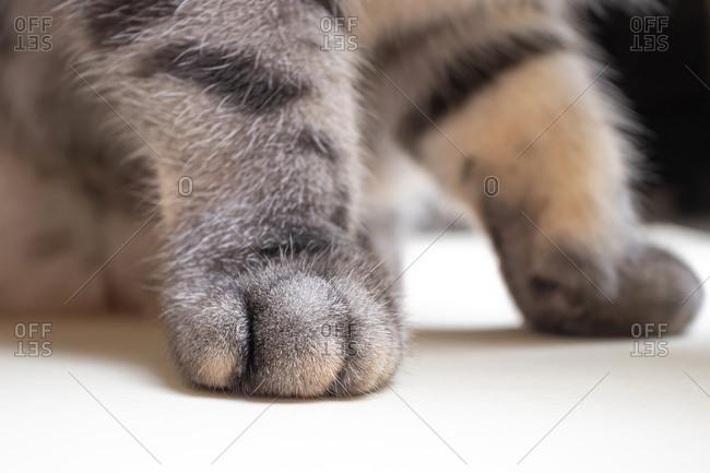 Gray cat legs on a beige background, copyspace