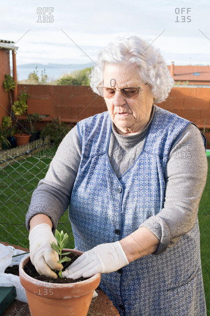 Old woman planting a plant in a flower pot in the garden