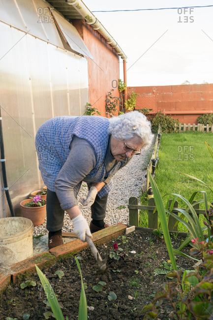 Older woman works on garden soil