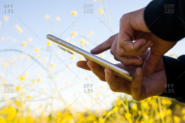 Woman's hands holding and using cell phone outdoors in flower field