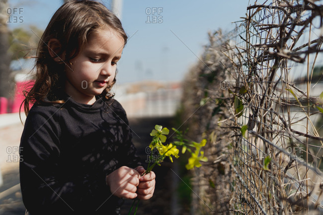 Adorable four-year-old girl looking at the yellow flowers in her hand.