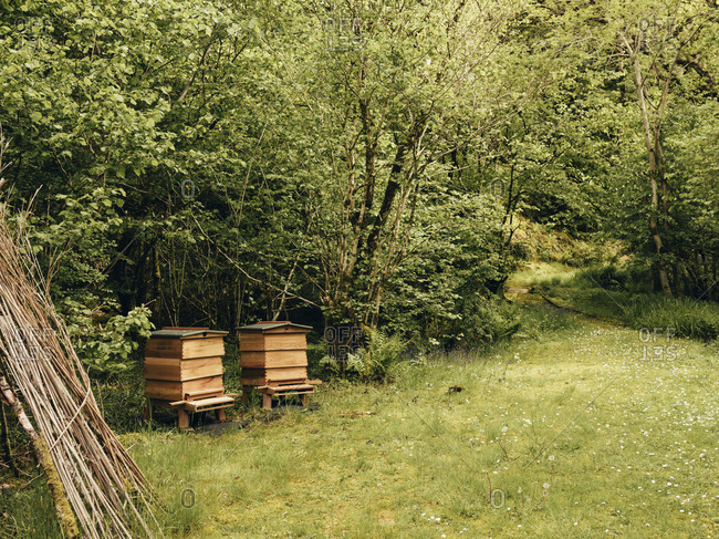 Beehives in forest in Scotland