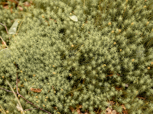 Detail shot of moss in Scotland