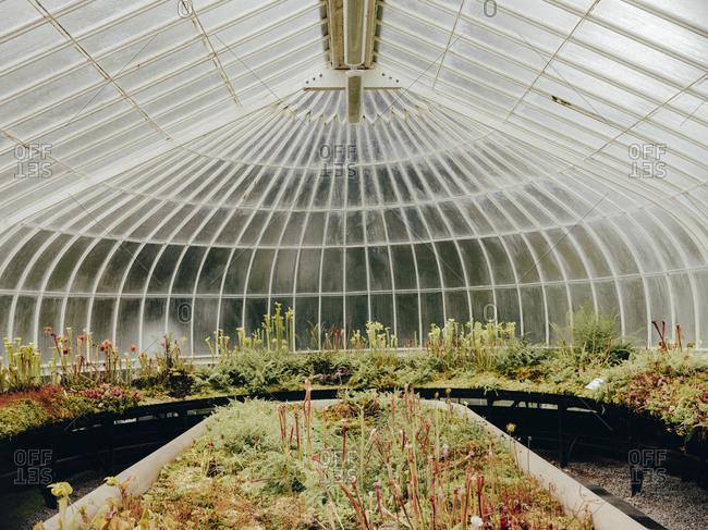 Carnivorous plants in Glasgow Botanic Gardens