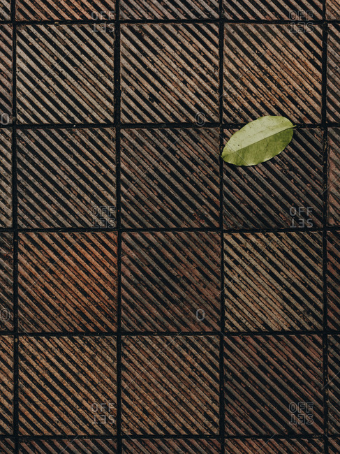 Closeup of terracotta tile with lone leaf