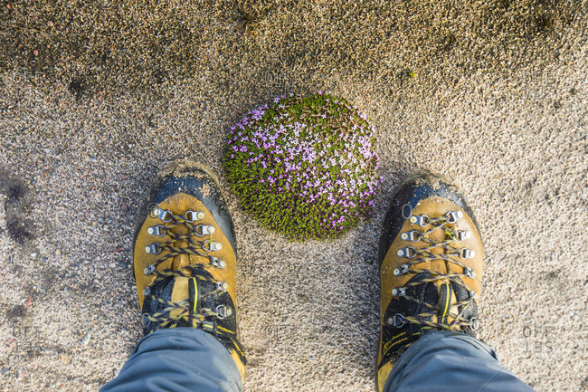 High angle view of mountaineer boots next to mossy floral mound.