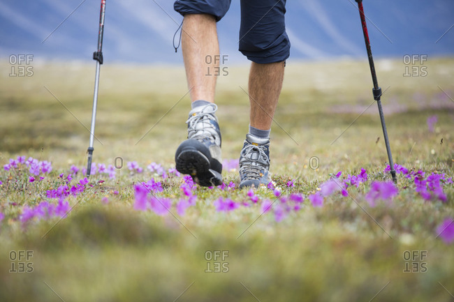 Low angle view of hiker walking through alpine meadow in the Arctic.