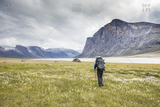 Backpacker hiking through meadow on Baffin Island, Canada.