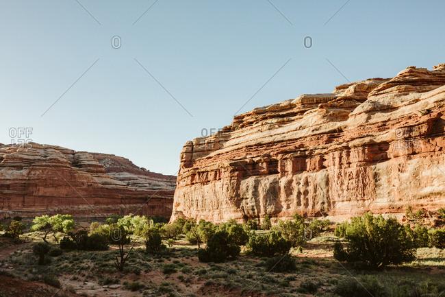 Desert shrubs in a desert spring oasis in the maze canyonlands Utah