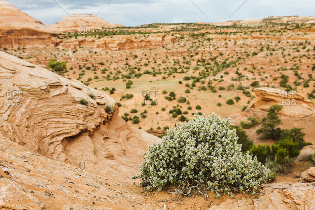 Green shrub at cliff's edge of red sandstone rock formations of Utah