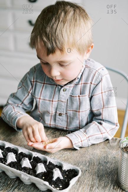 Five year old boy starting jalapeno seedlings.